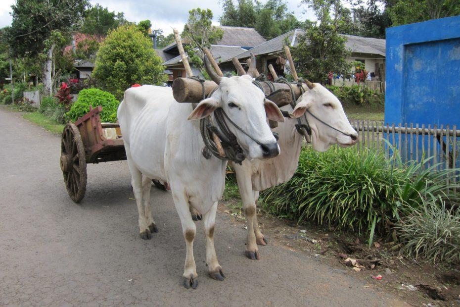 牛車 イメージ図
